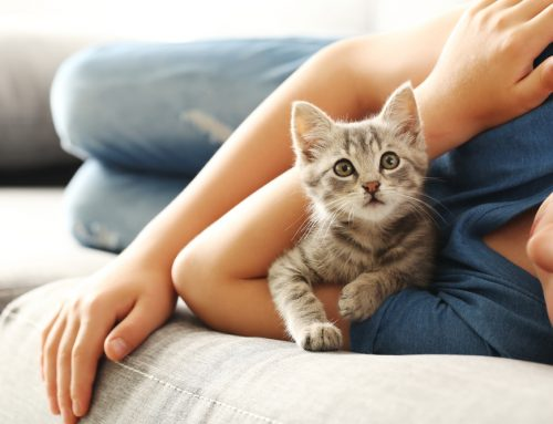 Your Kitten's First Year: An In-Depth Guide to Caring for Your New Kitten