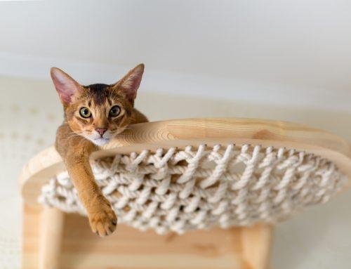 Indoor Enrichment For Your Cat