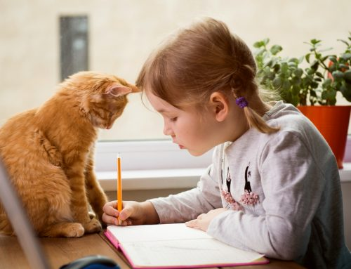 8 Tips to Prepare Your Pet for Back to School
